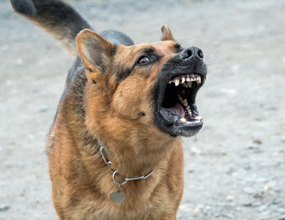 Why Your German Shepherd Is Not The Best Home Security